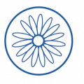 pitto fiore arnica